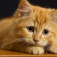 Красивые картинки котов (35 фото)