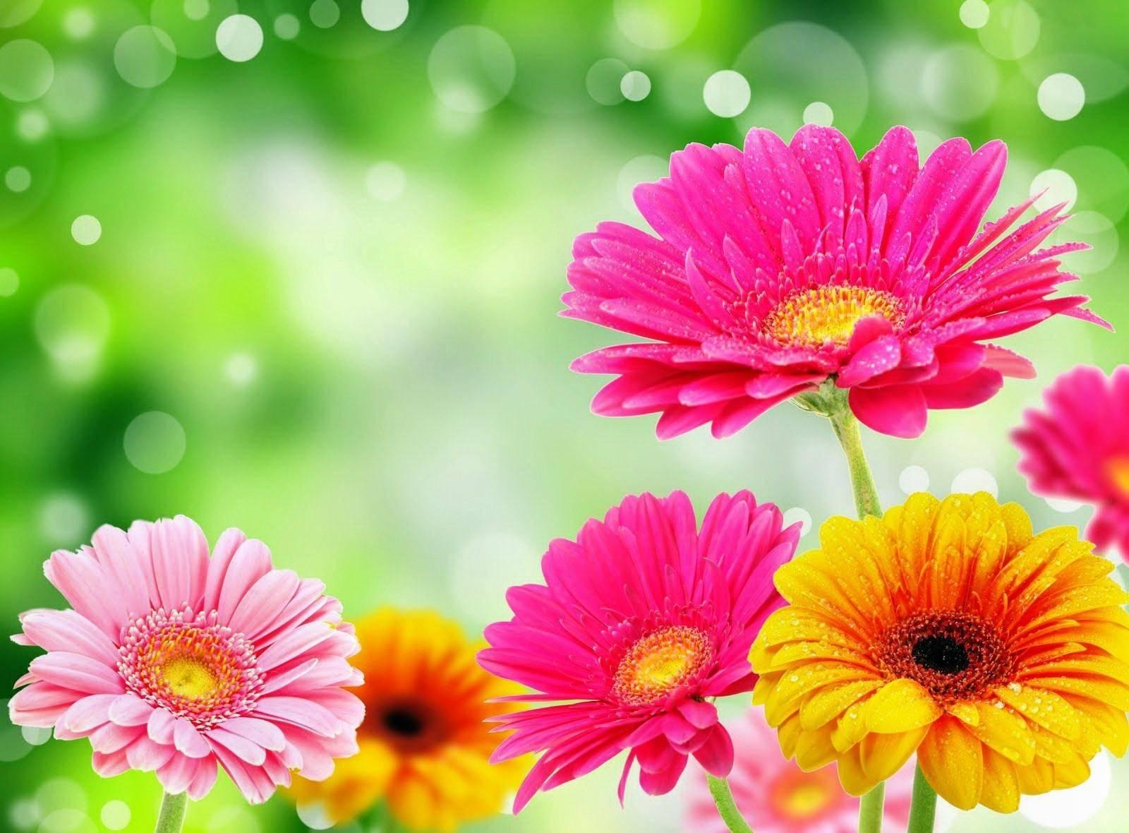 Цветы на весь экран андроид