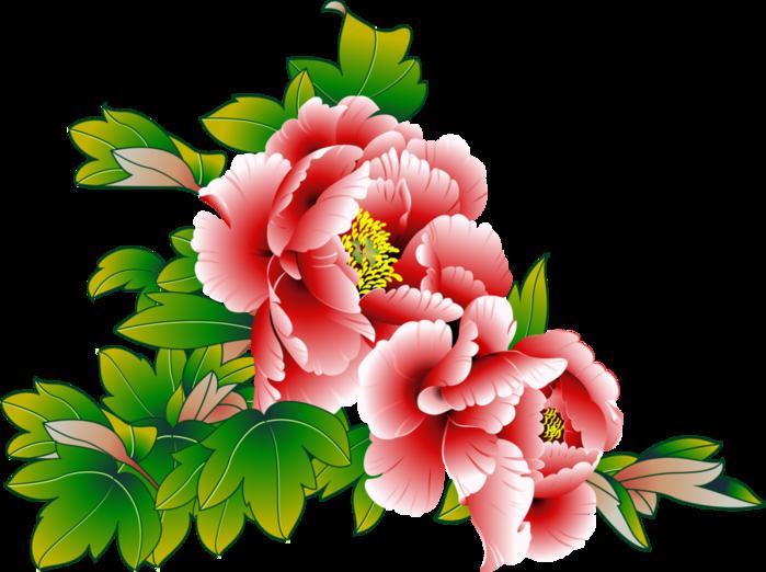 Тюльпаны png