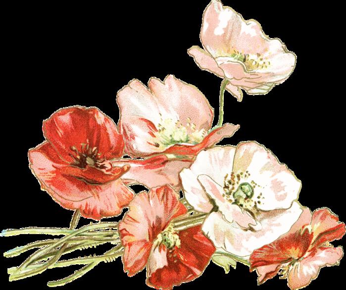 Нарисованные картинки красивые цветы (37 фото ... Фиолетовые Тюльпаны