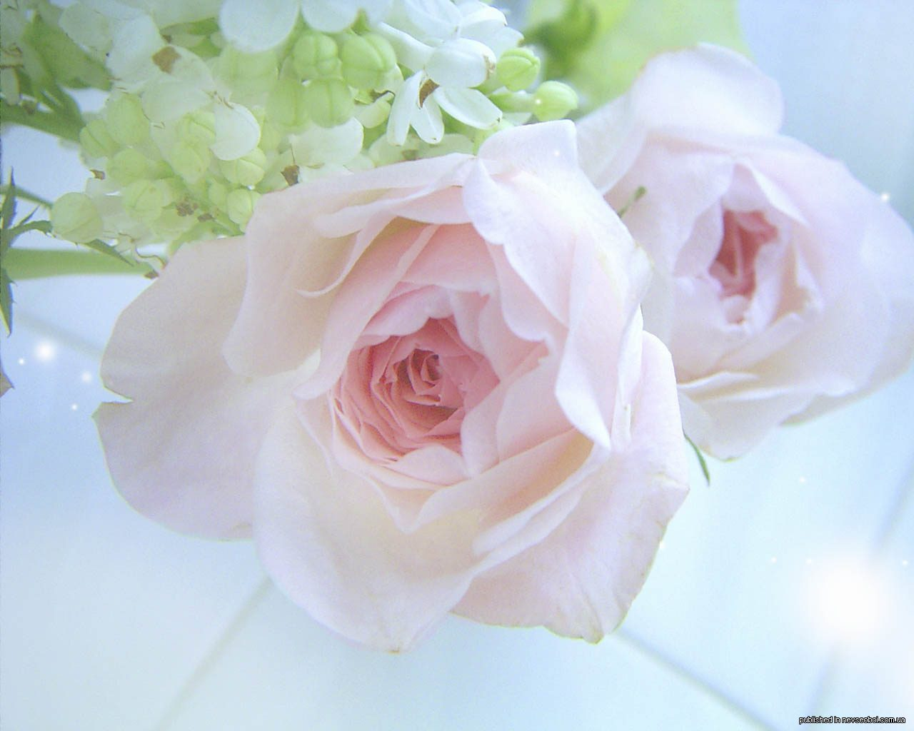 Картинки нежности цветы