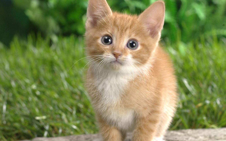 находятся маленькие кошачьи картинки рось протекает этом