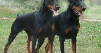 Картинки красивые с собаками (35 фото)