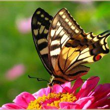 Красивые картинки с бабочками (40 фото)
