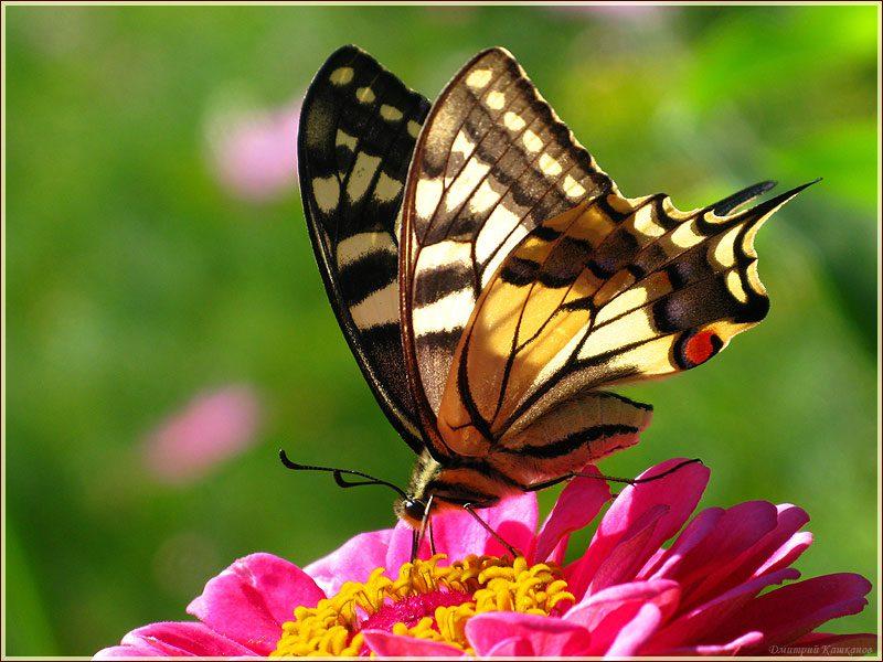 Красивые картинки с бабочками (40 фото) 🔥 Прикольные ...