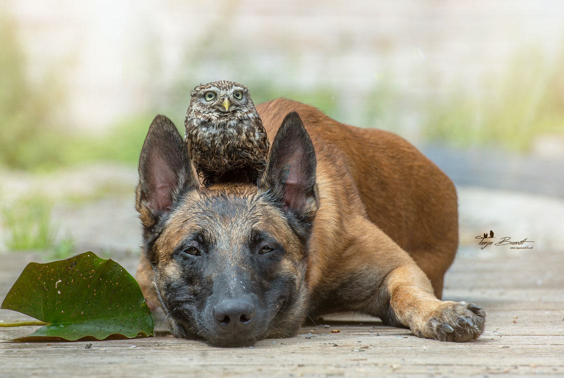 Картинки красивые с собаками (40 фото) • Прикольные ... Милый Щенок Хаски