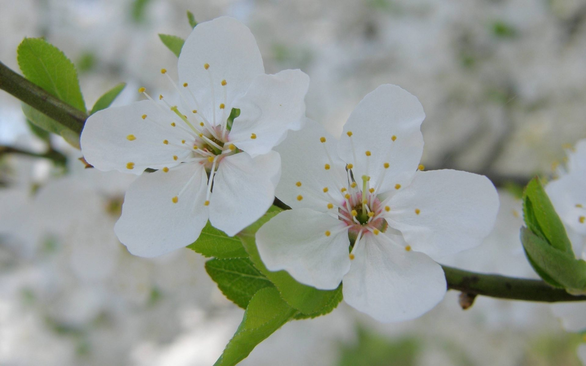 Цветок красивый фото