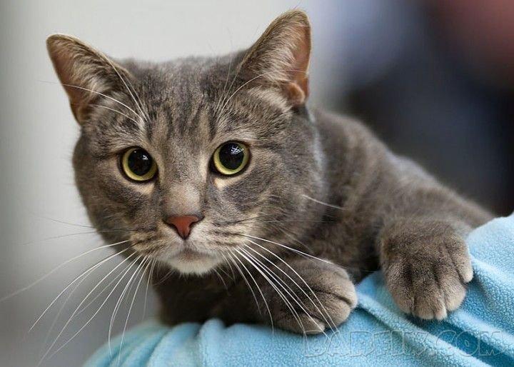 фото красивых котов