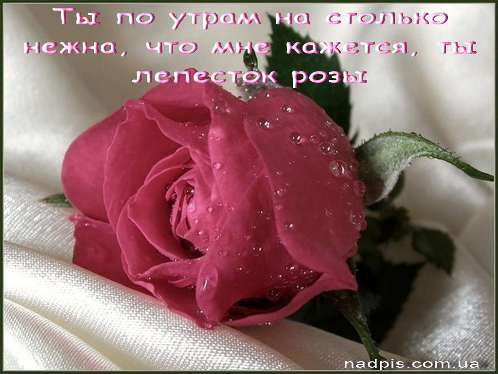 Цветы для тебя картинки с надписями