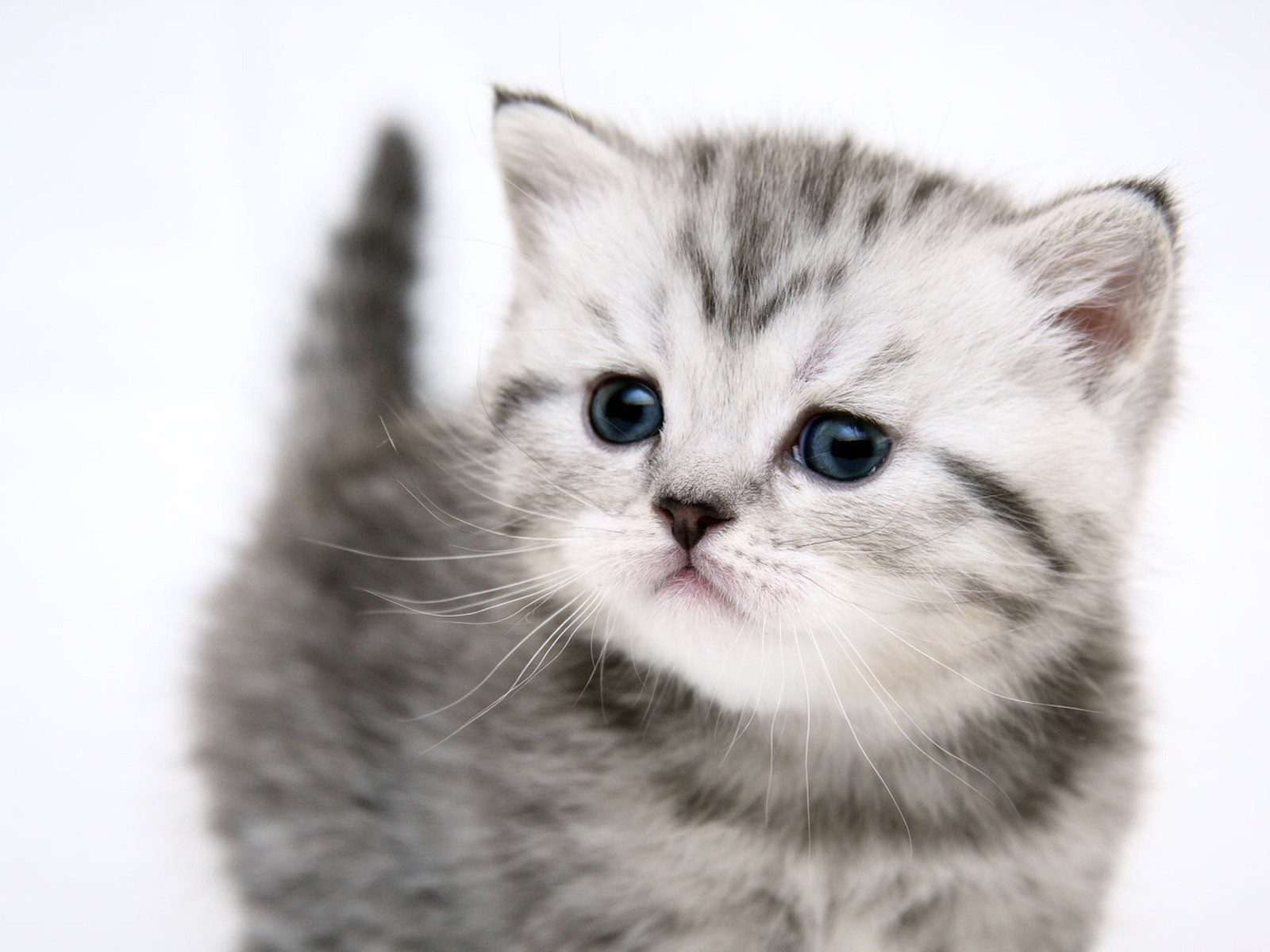 Картинки котиков покажи