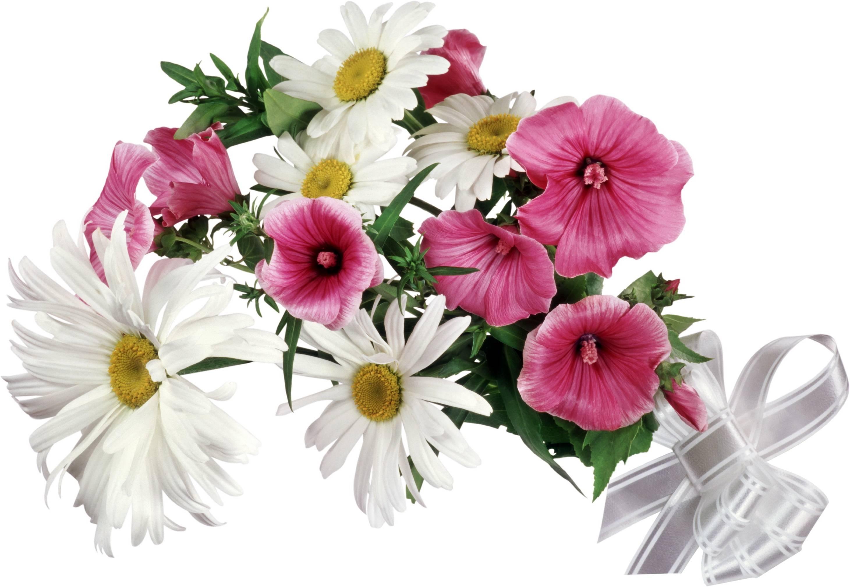 Картинки цветы красивые букеты на белом фоне