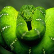 Красивые зелёные картинки (35 фото)