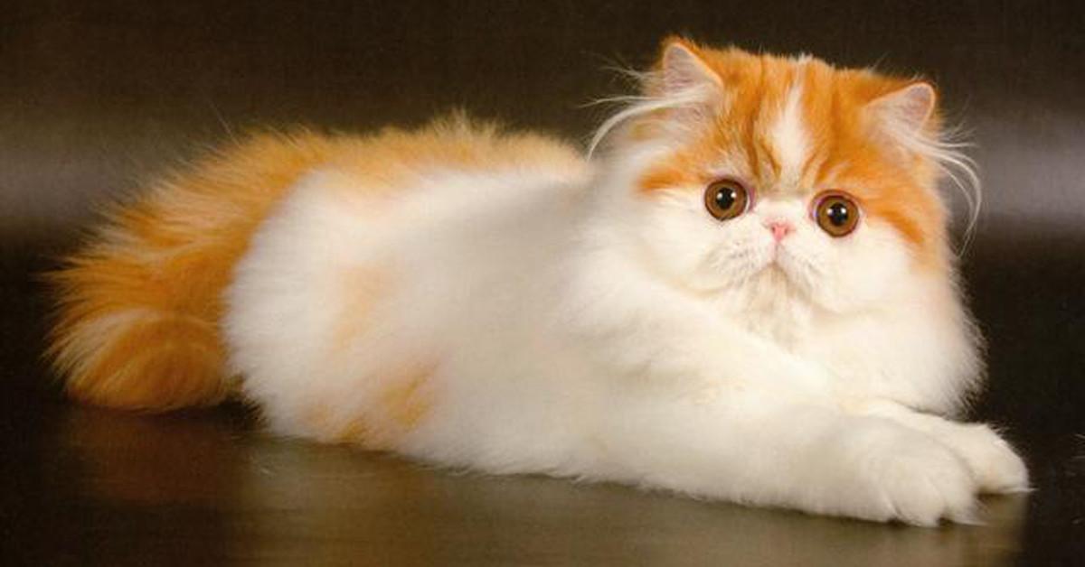 Скачать бесплатно картинки кошек