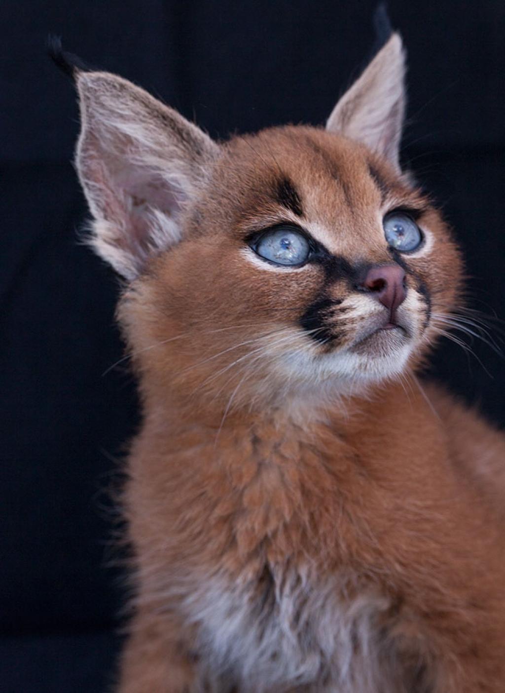 Картинки милые про котят