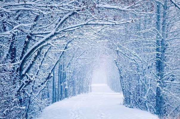 Зимний лес картинки на рабочий стол