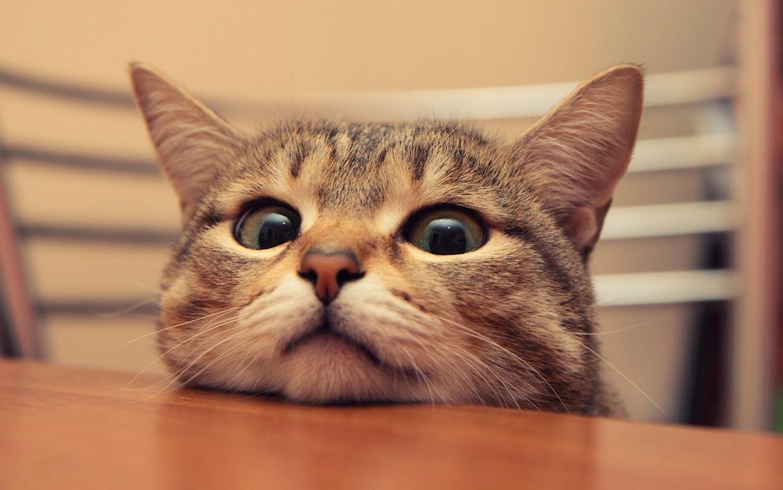 этом красивые картинки на телефон со смешными кошками кого-то вирт