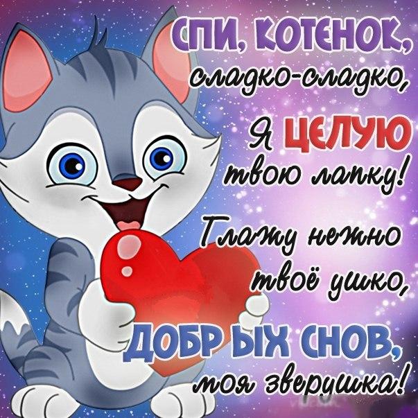 Shay, fox 503 фотографии ВКонтакте