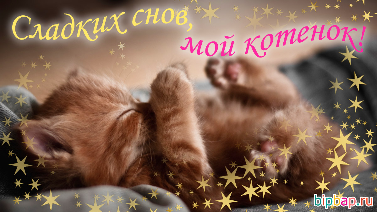 Картинки спокойной ночи любимый котенок
