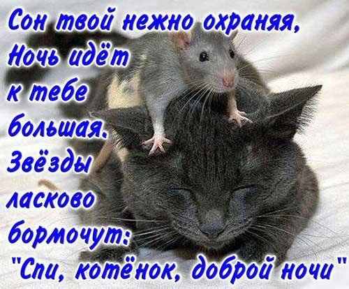 Rasulov, bevafo qiz mendan yiroq yuravering » Скачать музыку
