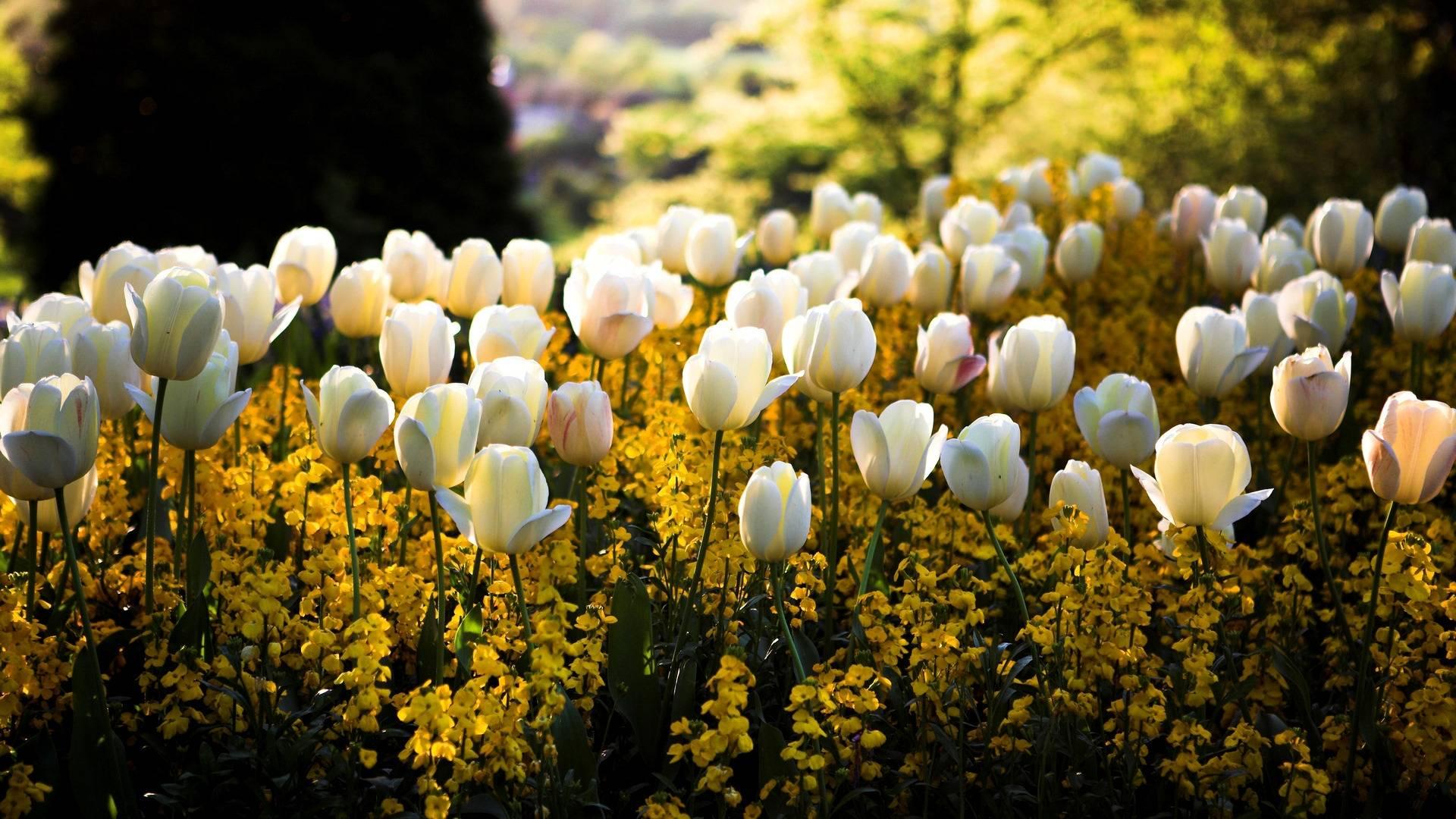 Весна пришла - обои для рабочего стола, картинки, фото | 1080x1920