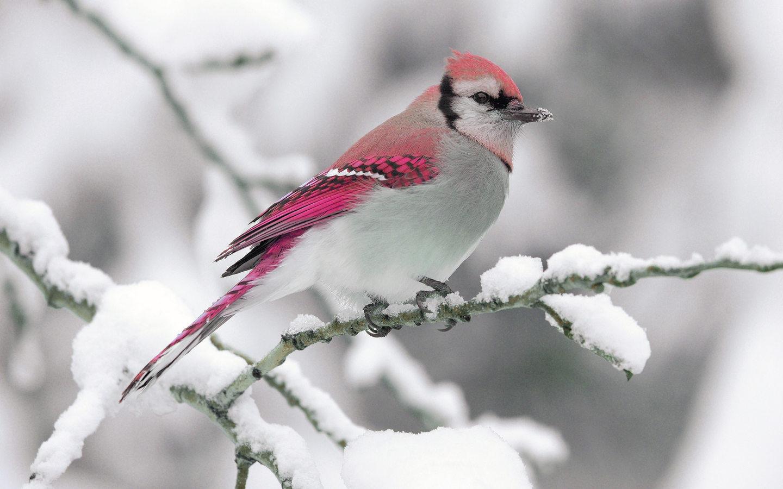 10 Top Cute Wild Animal Wallpaper Full Hd 1080p For Pc: Картинки красивые фото зимы (35 фото) • Прикольные
