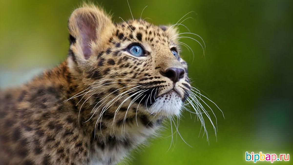 Красивые картинки животные милые нарисованные