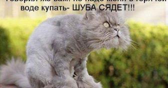 Прикольные фото котов с надписями (35 фото)