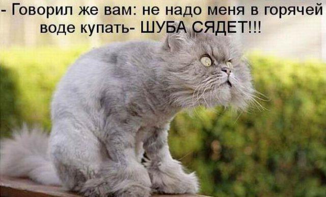 Смешные поздравления с котами фото 698