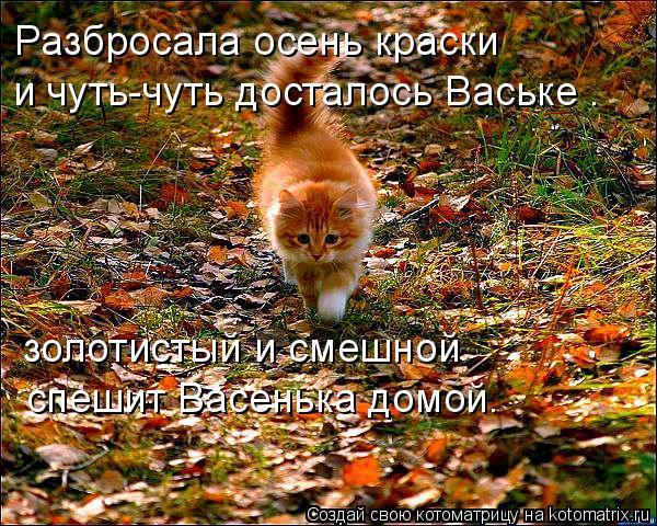 Кот в листьях фото