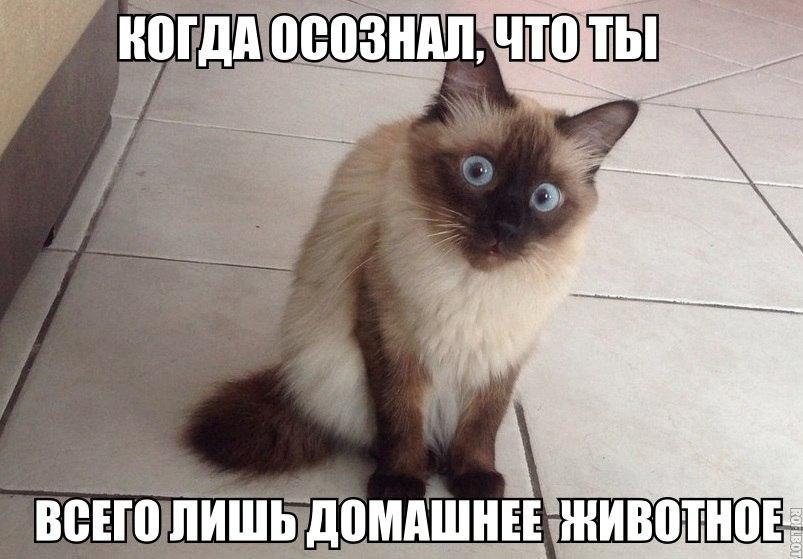 https://bipbap.ru/wp-content/uploads/2017/10/1427193931_uskj5v5waru.jpg
