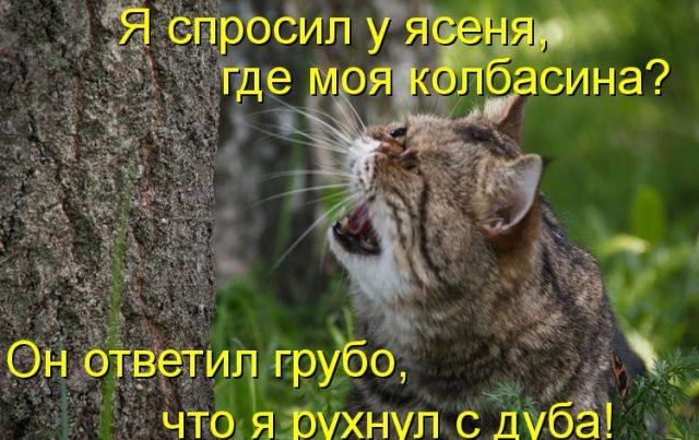 приколы про фото про котов с надписями