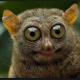 Смешные картинки на аватарку (35 фото)