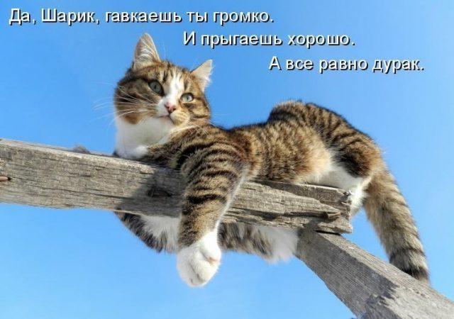 картинки смешные про кошек с надписями и котов