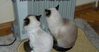 Смешные картинки котят с надписями (35 фото)