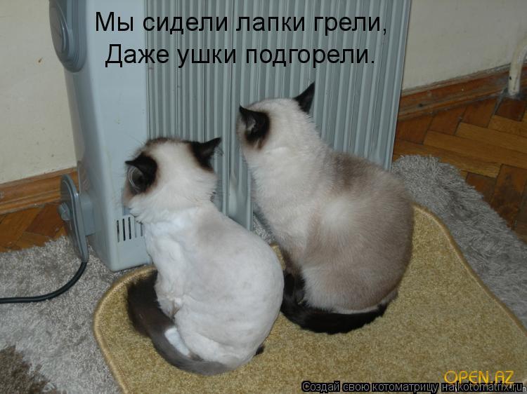 Смешные картинки котят с надписями (35 фото) ???? Прикольные картинки и юмор