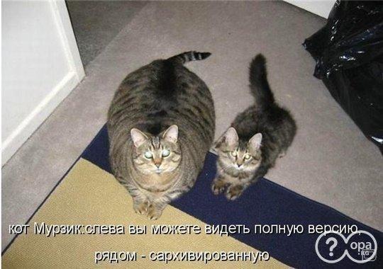 Смешные поздравления с котами фото 261