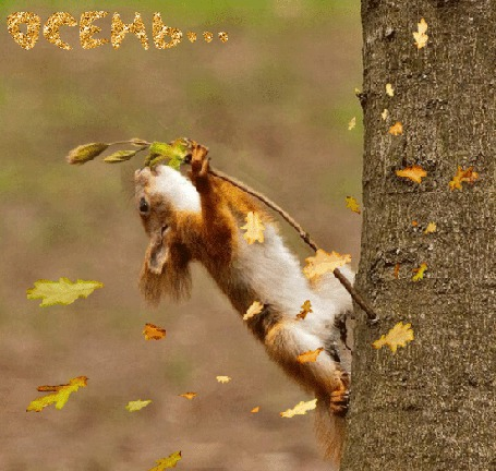 Кот в листьях картинки