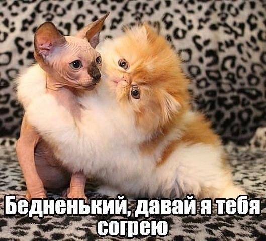смешные картинки обнимашки