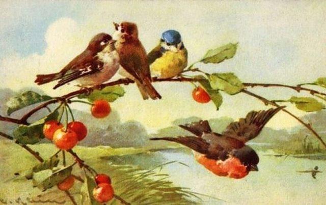 Скачать бесплатно фото птиц