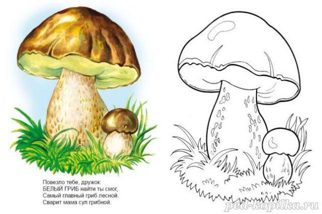 Картинки для детей белый гриб (32 фото) • Прикольные ...