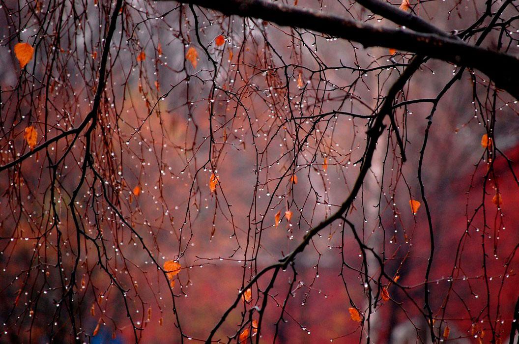 Осенние цветы кустовые фото с названием сорта