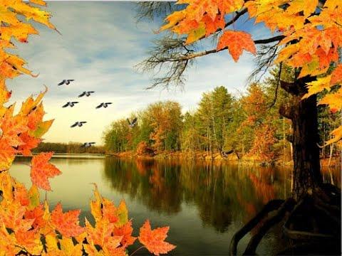 Картинки птицы осенью (35 фото) • Прикольные картинки и юмор Картинка Журавль