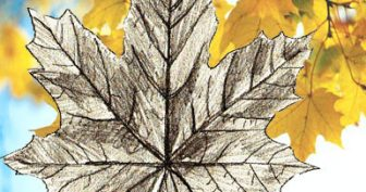 Как нарисовать осенние листья (20 фото)