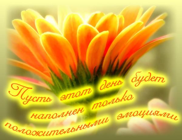 Цитаты о позитиве.: marina221613 — LiveJournal   463x600
