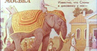 Картинки слон и моська (18 фото)
