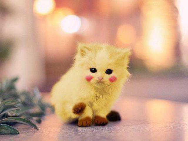 Картинки няшные котики (35 фото) • Прикольные картинки и юмор