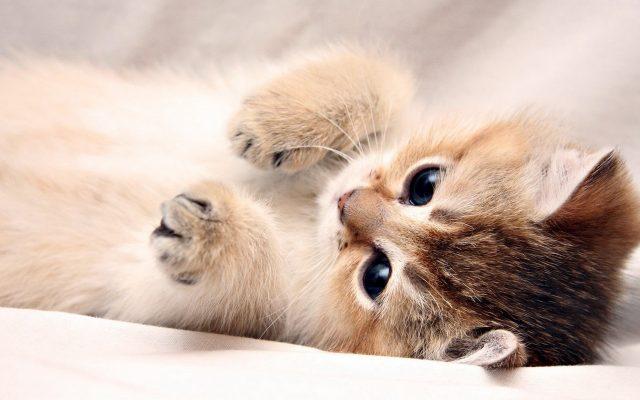 Cute Dog Images Hd Wallpapers Desktop Images Fidelity: Скачать милые картинки (35 фото) • Прикольные картинки и юмор