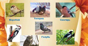 Картинки с названиями зимующих птиц (13 фото)