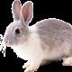 Картинки для детей кролик (24 фото)