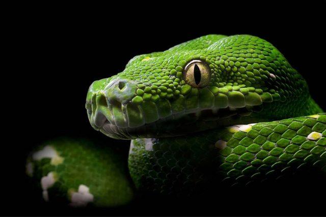 8e1384824bea Далее предлагаем посмотреть и бесплатно скачать на рабочий стол картинки  красивых змей.